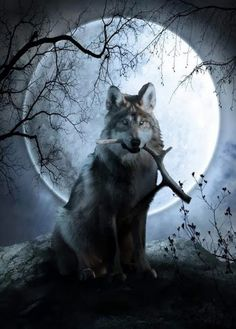 Wolf moon by aycatanrikulu on DeviantArt Wolf Images, Wolf Pictures, Beautiful Creatures, Animals Beautiful, Cute Animals, Tier Wolf, Wolf Artwork, Fantasy Wolf, Wolf Stuff