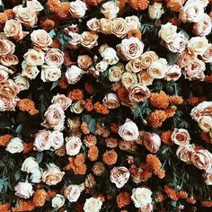 Aesthetic floral background images in collection) page 1 Autumn Aesthetic, Flower Aesthetic, My Flower, Beautiful Flowers, Flower Colour, Beautiful Smile, Flower Wall, Fleur Orange, Plants Are Friends