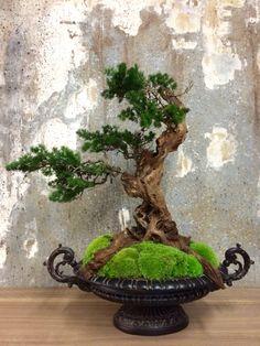Bonsai creation