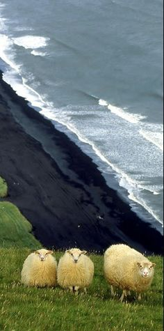 #Iceland http://en.directrooms.com/hotels/country/2-76/