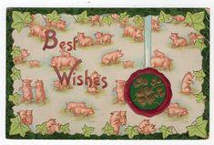 Vintage Pigs Postcard   Best Wishes Pigs Piglets Ivy