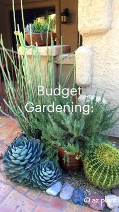 Front Garden Landscape, Front House Landscaping, Landscape Design, Garden Design, House Landscape, Creative Landscape, Farmhouse Landscaping, Succulent Landscaping, Planting Succulents