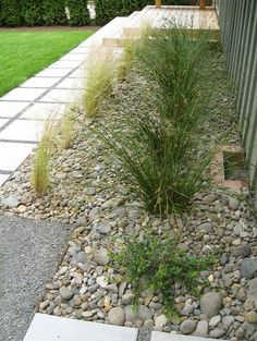 Mid Century Ranch Grasses and Pavers modern [Must do for area in front of front door... tg]