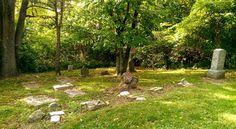 Your Image, Cemetery, Genealogy, Plants, Flora, Plant, Planting