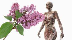 Garden Sculpture, Herbalism, Buddha, Statue, Outdoor Decor, Food, Meal, Eten, Meals