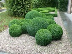 Every beautiful cottage garden has common principles that make them a success. Learn about the fundamentals you need to create your very own cottage garden. Boxwood Garden, Garden Hedges, Topiary Garden, Topiary Trees, Modern Landscaping, Backyard Landscaping, Boxwood Landscaping, Back Gardens, Outdoor Gardens