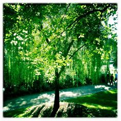 Weeping Willow... love these trees!