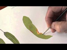 Botanical Art Tutorial - 'Gumleaf in Detail' - YouTube