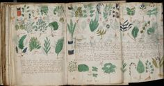 "The Voynich Manuscript is a mysterious volume of text and illustrations written some time in the 15th or 16 centuries, so named after Wilfrid M. Voynich who acquired the book in 1912. It has been classified as ""magical"" and ""scientific"" but is written in an undeciphered text and is said to be the most ""mysterious manuscript in the world."""