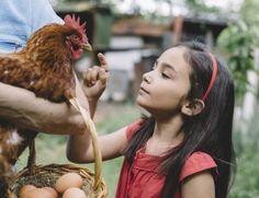 Avoir des poules chez soi pour produire moins de déchets