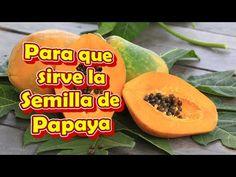 (2) Para que sirve la Semilla de Papaya en ayunas, para los Parasitos, el higado, el Riñon - YouTube