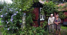 I snart 50 år har billedkunstneren Nulle Øigaard og tegneren Ib Spang Olsen arbejdet hjemme og tilstræbt at være mest muligt i haven