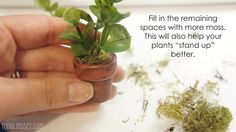 Todd & Lindsey: DIY Dollhouse Miniature Plant