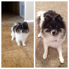 Tito has grown up SO much! :) #puppylove
