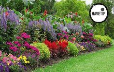 Lemon Lime Nandina, Sweet Potato Plant, Ornamental Kale, Fountain Grass, Fall Containers, Fall Planters, Colorful Plants, Greenhouse Gardening, Garden Edging