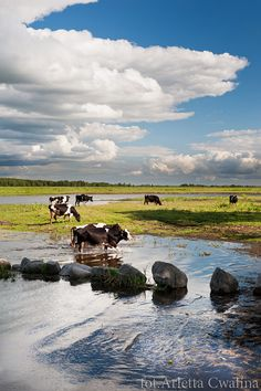 Welcome to see my trip to Biebrza National Park and the wetland area in Poland, Europe. Bucolic landscape with domestic animals. Blog post and photography by Arletta Cwalina.