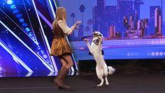 Sara Carson and Hero on America's Got Talent - Neatorama Sara Carson, Tastefully Offensive, Season 12, Pirate Theme, America's Got Talent, Collie, Movies And Tv Shows, Fun Facts, Cute Animals