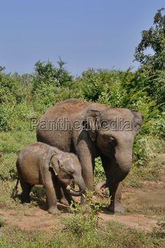 Elephant, Animals, Pictures, Animales, Animaux, Elephants, Animal, Animais