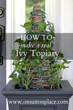 Easy tutorial for making your own real ivy topiary. Perfect for holiday decorating!