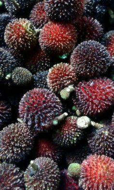 Local fruit: pulasan.. Sweet!