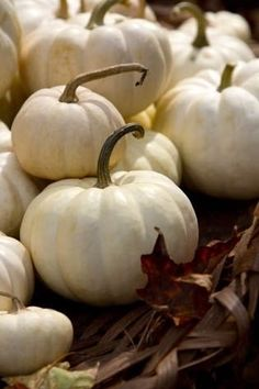 White pumpkins are a must when designing for Fall Harvest Time, Fall Harvest, White Pumpkins, Fall Pumpkins, Mini Pumpkins, Autumn Day, Autumn Leaves, Winter, Photo Fruit