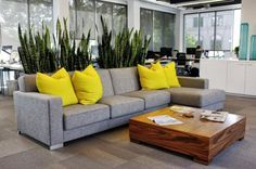 A living wall of sansevieria or snake plants dividing the work space from the informal area