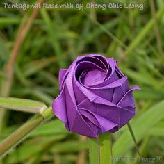 Five handmade folding origami roses graphic tutorial taught you how to create beautiful five origami roses (Chinese)