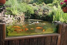lake garden pond aquarium