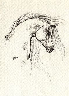 Horse drawing of an Arabian Horse - #equine #art