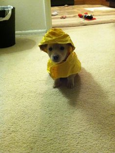 Rain coat Waterproof - - Long Rain coat Style - Rain coat For Men Raincoat Baby Raincoat, Raincoat Outfit, Yellow Raincoat, Super Cute Puppies, Cute Dogs, Raincoats For Women, Coat Patterns, Dog Life, Puppy Love