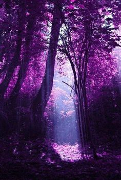 a purple hued forest, inspiration for #purple #gems