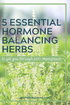 These 5 herbs are peri-menopause hacks which benefit midlife women to reduce peri-menopause symptoms. Read the blog post to find out which 5 herbs like Holy Basil can help if you feel your hormones are out of whack, you're feeling stressed out or feeling tired all the time and want to restore balance. Find out how these herbs can balance hormones naturally and alleviate peri-menopause symptoms with herbs for a peri-menopause diet for a midlife woman. Foods To Balance Hormones, How To Regulate Hormones, Balance Hormones Naturally, Menopause Diet, Post Menopause, Menopause Symptoms, Feeling Stressed, How Are You Feeling, Hormone Diet
