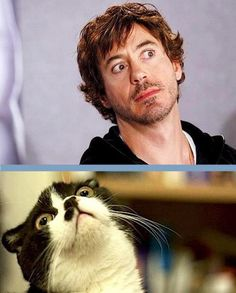Funny pictures about Robert Downey Junior's cat. Oh, and cool pics about Robert Downey Junior's cat. Also, Robert Downey Junior's cat. Robert Downey Jr., Downey Junior, Laughing So Hard, Tony Stark, Crazy Cat Lady, Crazy Cats, Just For Laughs, Film, Laugh Out Loud