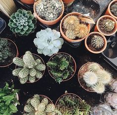 West Elm Dallas' succulent workshop