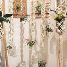 Loving all these air plants from @verdant_matter We are here until 10! Come on by ✨