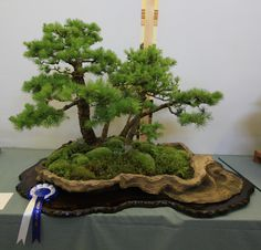 Larch group_2nd place