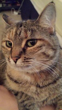 My New Little Baby Rosy - http://cutecatshq.com/cats/my-new-little-baby-rosy/