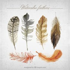 Watercolor feathers collection Free Vector