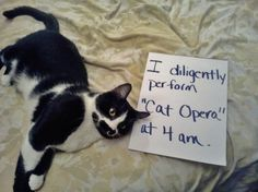 The best of cat shaming - Part 3 - FB Troublemakers