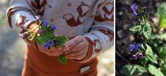 Ak si tieto bylinky nenazbierate teraz, už sa k nim tento rok nedostanete! | Záhrada.sk