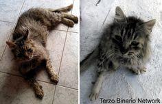 SCIACCA (AG): SMARRITO GIACOMO, GATTO MARRONE E GRIGIO. RICOMPENSA http://www.terzobinarionetwork.com/2015/11/sciacca-ag-smarrito-giacomo-gatto.html