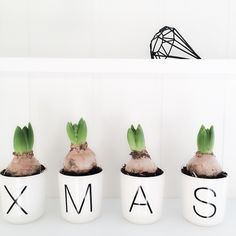 Hyacinth in Christmas white china jars. Vicky's Home: Nórdico en blanco y negro + diy / Nordic in Black and White + diy
