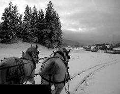 I Am Canadian, Horses, Magic, Animals, Christmas, Xmas, Animales, Animaux, Animal