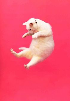 {jump jump cat}