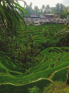 Bali Kuta Bali, Rice Terraces, World 7, Religious Architecture, Largest Countries, Pacific Ocean, Southeast Asia, Tropical, Bali Travel