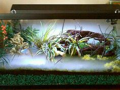91 Best Vivarium Images Vivarium Fish Tanks Aquarium