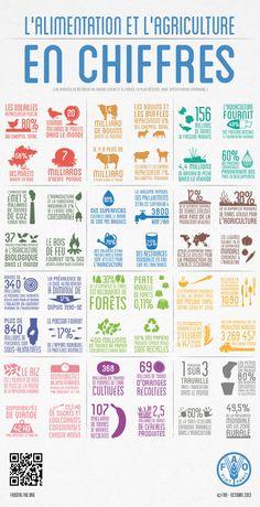 Infographie de la FAO