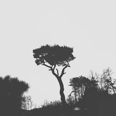 #korea_photos #tree #treepark #treeporn #black #white #strong #press #gloomy #tried #heavy #duty #sleepy #headache #snapshot #bnw #blacknwhite #blackphotography #photooftheday#blackandwhite  #streamzoofamily #streamzoo #eyeem by parkjc1