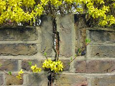 A bad witch's blog: Pagan Eye: Forsythia Flowers and the Crack in My W...