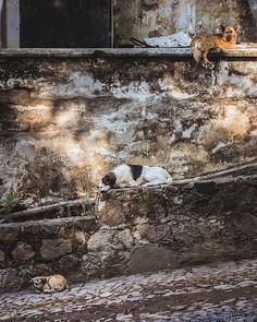 Street friends of Antigua Guatemala  . . . #NoSetup #DogsAreAwesome #street #dog #AntiguaGuatemala #travelphotography #exploretocreate #Contrastes #AlexKrotkov #photography #Antigua #Guatemala